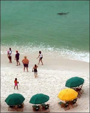 垂钓游泳鲨鱼犹存美海岸少女咬死垂钓风险(图篮球决心书图片